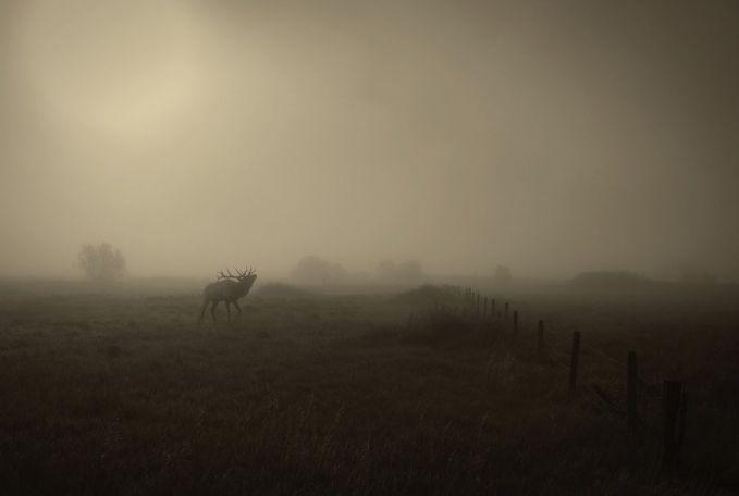 Ini adalah potret padang rumput berliku di Siblings, Montana.