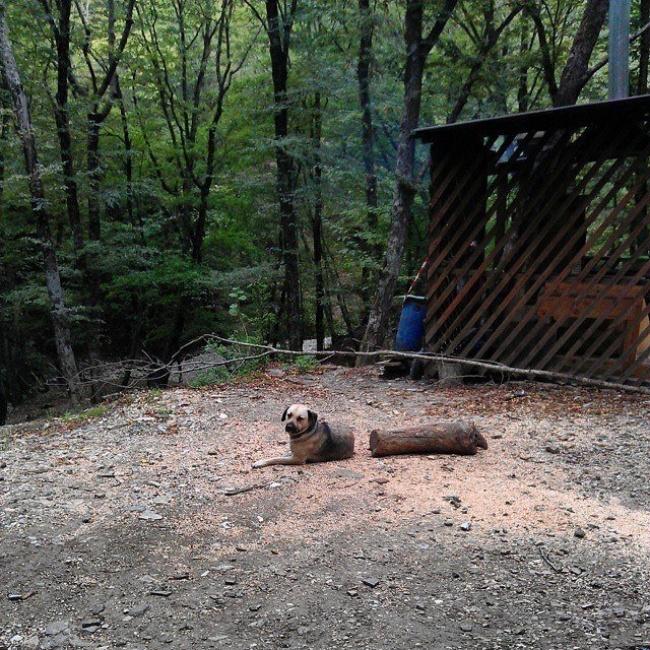 Sama juga sama anjing di foto ini. Dia bukan siluman lho, kebetulan aja dia lagi pose di dekat kayu yang terbelah jadi dua.