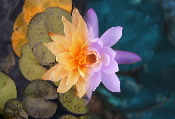 Gini jadinya kalau bunga dari Australia digabungkan dengan bunga dari Indonesia pulsker. Indah bukan?.