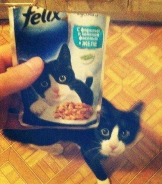 Bisa jadi kucing orang ini yang menjadi model untuk kemasan makanan hewan yang dipegangnya.