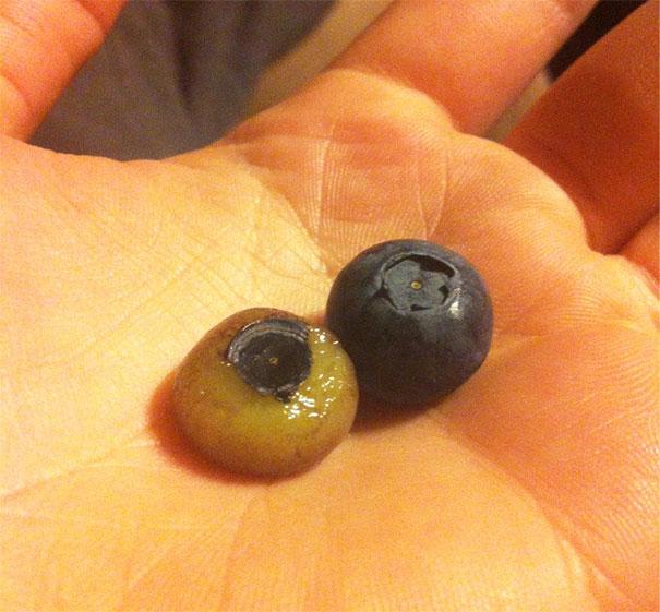 Pasti kalian mikir orang yang ngupas blueberry ini kurang kerjaan banget ya?. Tinggal dimakan aja masih harus dikupas kayak gini. Tapi inilah namanya seni mengupas buah pulsker.