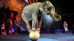 7 Fakta Miris Dibalik Wisata dan Atraksi Gajah di Asia yang Sering Kita Tonton