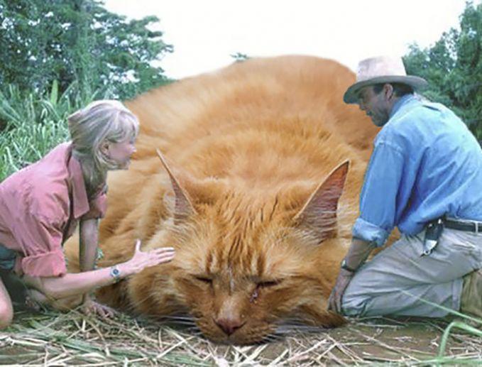 Uh tayang tayang, bobokla bobok kucingkuu sayang. #Nyanyi~