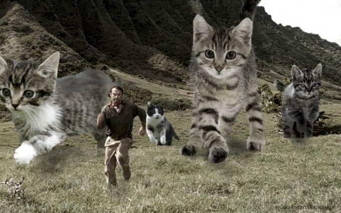 Lah, ngapain lari bang? Itukan imut-imut kucingnya. Wkwkwkw