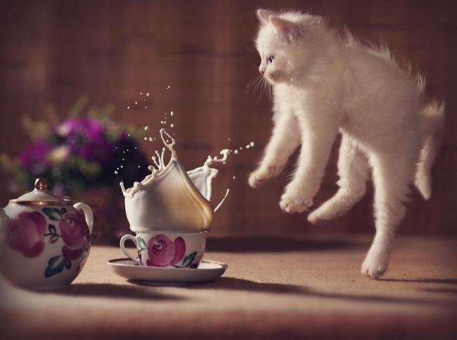 Keyennn, bisa gitu sih reaksi kucingnaaa!