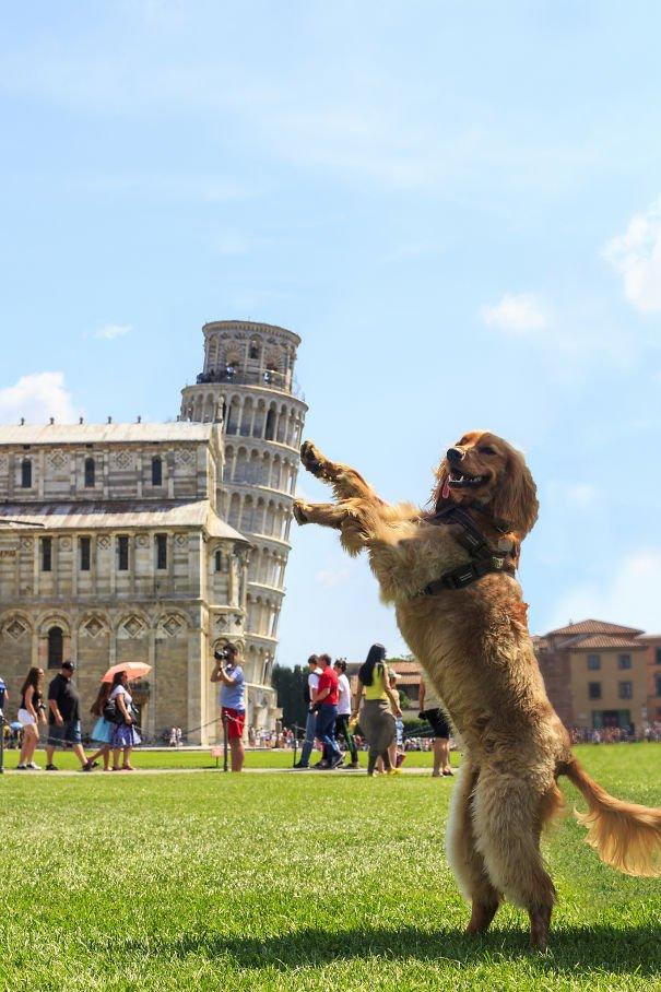 Ini mah anjing anti-mainstream. Dorong terus njing!!!