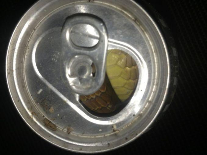 Dan ini saat kamu membuka kaleng soda yang baru kamu beli. Ternyata isinya adalah ular.