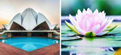 10 Bangunan Megah di Dunia yang Terinspirasi dari Alam