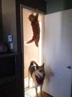 10 Tingkah Lucu Kucing yang Bikin Gagal Paham