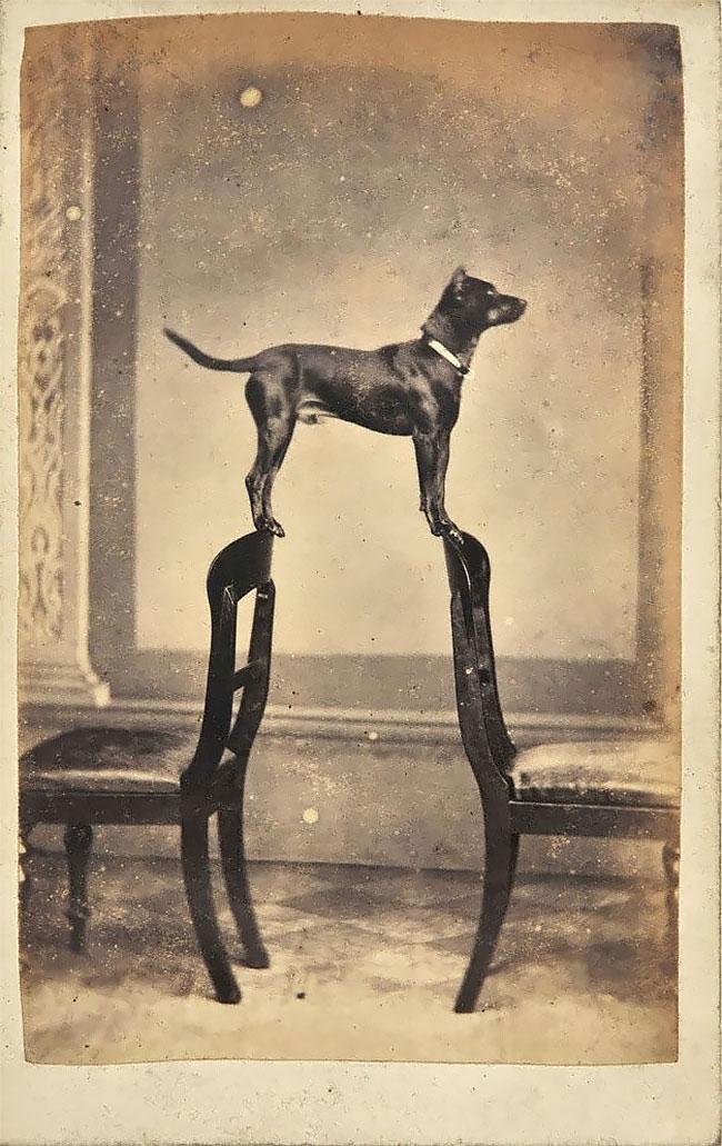 Ini baru namanya anjing pintar. Pasti butuh waktu yang nggak sebentar buat mengatur keseimbangan. Apalagi jaman dulu fotonya nggak secanggih sekarang, butuh waktu yang lumayan lama untuk menjepret.