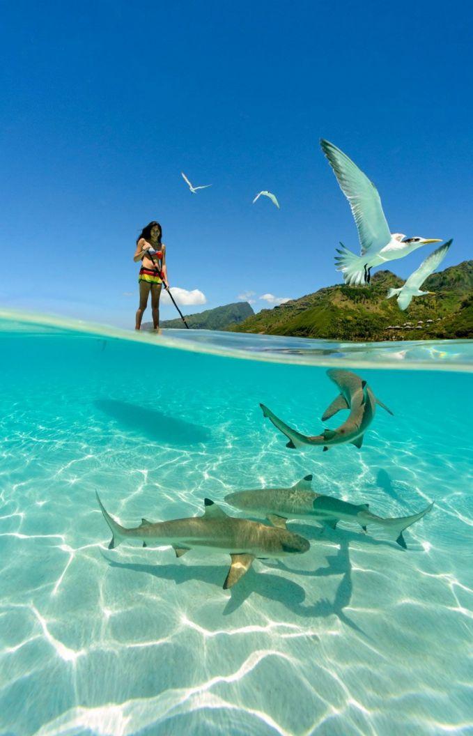 Keindahan darat, laut, udara, dan kecantikan menjadi satu kesatuan dalam sebuah gambar. #YOOOT