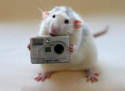 Mencoba jadi fotografer nih Pulsker tikusnya, ada yang mau difoto?.