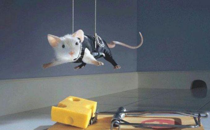 Bagi si tikus, nggak ada yang tak mungkin walaupun djerat kayak gini dia masih berhasrat buat ngambil tuh keju apapun resikonya.