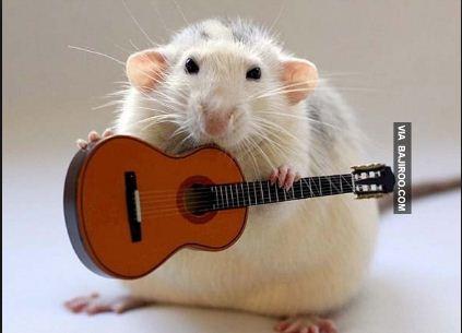 Emang nih tikus multitalent banget, tadi main seruling sekarang mencoba buat mainin gitar Pulsker.