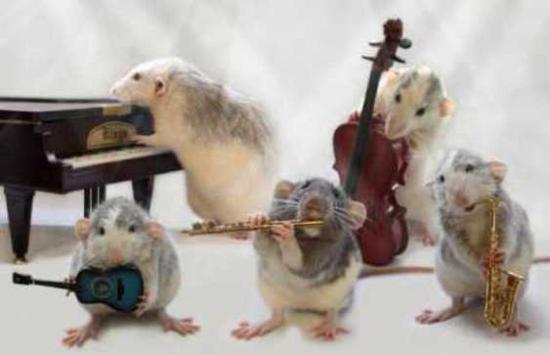 Nah, kalau yang ini dia bersama kawan-kawan sepertikusan membentuk band tikus ceritanya.
