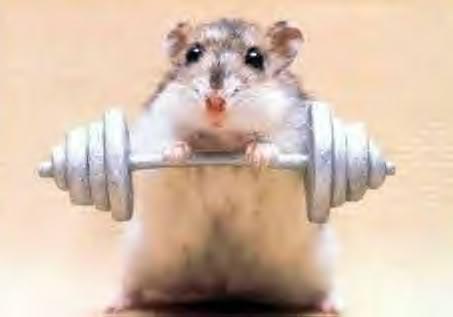 Walaupun cuma seekor tikus, olahraga wajib diperhatikan ya. Salah satunya dengan angkat besi kayak gini. Tikus aja olahraga, masa kalian nggak?.