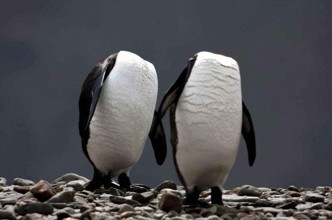 Lah, itu kepala Pingunnya kemana? Ada yang tau?