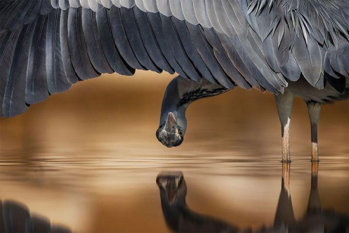 Sudut pengambilan gambar yang tepat menghasilkan foto yang menakjubkan. Seperti yang dilakukan Ahmad Al-essa asal Kuwait.
