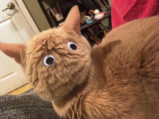 Kalo kucingmu mengabaikanmu Pulsker, coba deh tempelin mata dibelakang kepalanya, biar serasa dia hirau gituuuh. #LifeHack