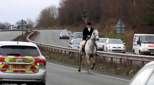 Saat kuda beneran menjajal jalanan kuda besi.