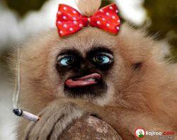 8 Foto Monyet Editan yang Bisa Membuatmu Tertawa Lebar Mengawali Hari Ini