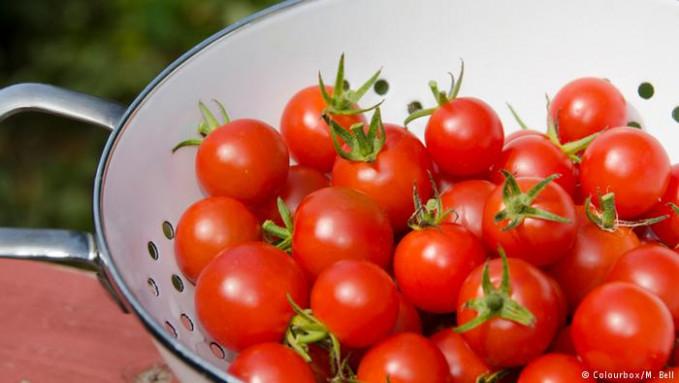 Berikutnya ada jenis tomat cherry yang mengandung zat lycopene yang baik untuk menangkal radikal bebas, penuaan dini dan katarak. Namun, tomat jenis ini juga mengandung solania yang berbahaya jika dikonsumsi berlebihan. Nah, itu dia Pulsker beberapa sayur yang sebaiknya kalian hindari untuk dikonsumsi secara berlebihan. Seperti kata pepatah, semua yang berlebihan itu emang nggak baik. Jadi, bijaklah dalam memilih dan mengkonsumsi sayuran ya Pulsker.