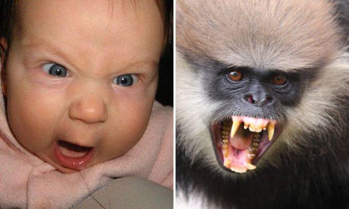 Semarah-marahnya anak bayi emang terlihat lucu. Tapi kalau yang marah sebelah kanan nih, udah nggak lucu lagi.
