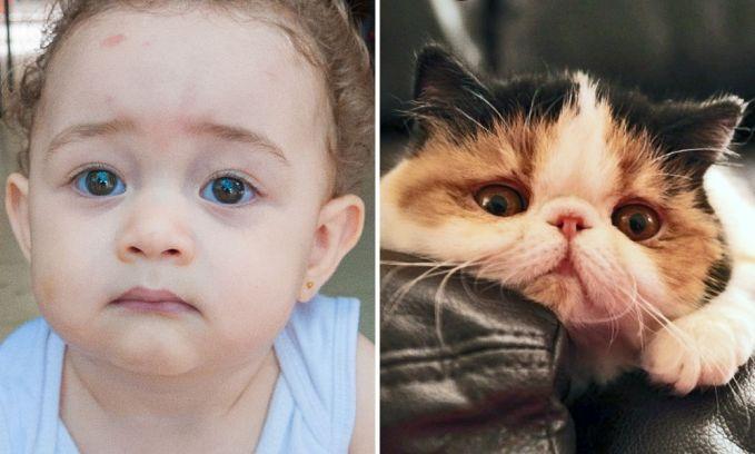 Ekspresi sedih yang ditunjukkan oleh seorang anak kecil dan seekor kucing. Polos banget ya mereka berdua?.