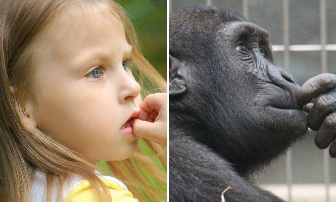 Keduanya lagi mikirin sesuatu Pulsker. Mungkin si anak kecilnya lagi mikirin simpanse peliharaanya dilepas alam liar, dan si simpanse lagi kangen sama pemiliknya ini.