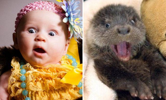 Hmm, menurut kalian siapa nih yang niru duluan?. Anak-anak yang meniru ekspresi hewannya atau justru sebaliknya?. Si hewan niru ekspresi manusia?. Ah, jadi bingung sendiri kan?.
