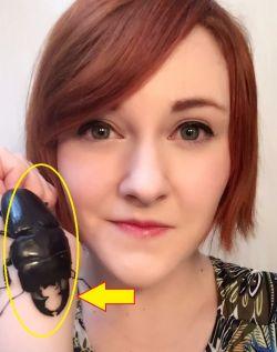 Kenalin Nih Si Spike, Kumbang Peliharaan Lucu Serba Bisa yang Viral di Twitter