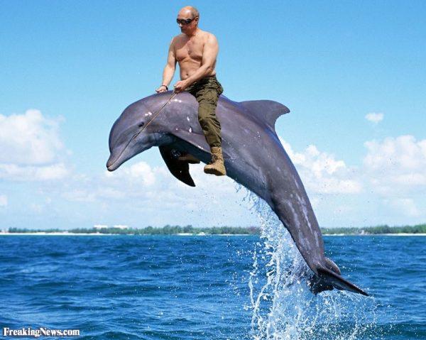 Waduh, Pak Putin beralih naik lumba-lumba sekarang. Mungkin dia udah bosan naik kuda terus selama liburan. Jadi pengen nyobain hal yang baru. Boleh juga ya trik editan foto bareng lumba-lumba kayak gini?. Lain dari yang lain posenya. (Sumber foto : Bajiroo.com)