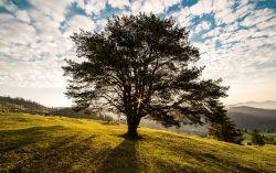 7 Filosofi Pohon yang Bisa Kita Petik Sebagai Pelajaran Hidup