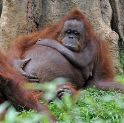 Kumpulan Foto Menggemaskan Hewan yang Sedang Hamil, Yakin Nggak Pengen Ngelus Perutnya?