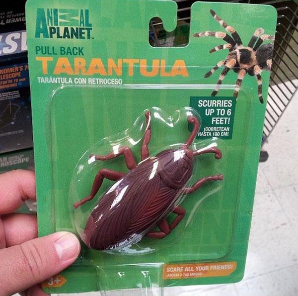 Apakah ini tarantula dari spesies baru hasil persilangan dengan kecoak?.