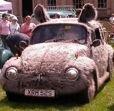 Mobil kelinci Bisa dipastikan pemilik mobil VW Beetle adalah pecinta kelinci. Pasalnya, mobil ini dimodif dengan bulu kelinci lengkap dengan mata, telinga dan kumisnya.