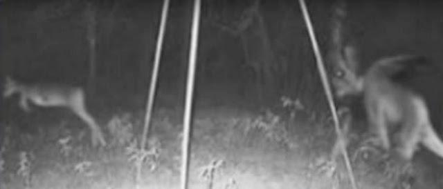 Dalam foto ini rusanya seperti ketakutan dikejar makhluk aneh dibelakangnya.