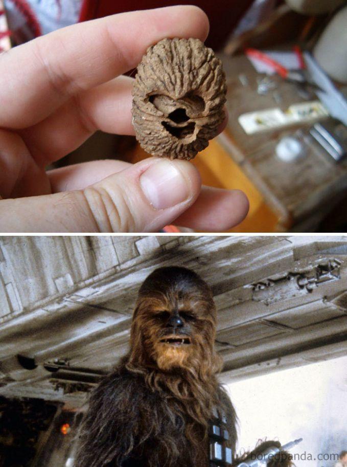 Biji buahnya kalau diliat lagi emang mirip sih sama sosok wajah Chewbacca Pulsker. Bedanya dia nggak berbulu.