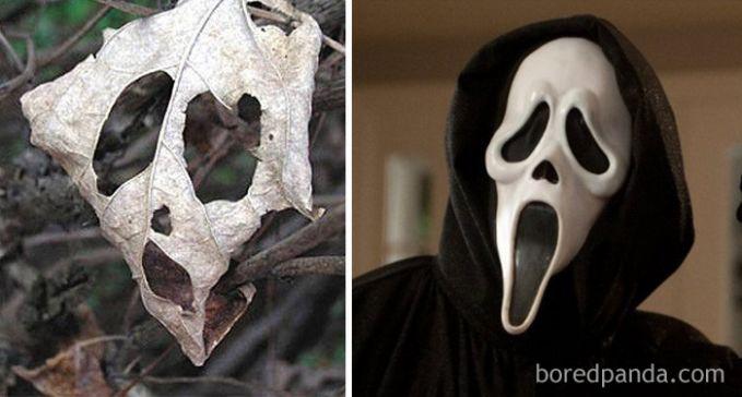 Entah karena proses alami atau dengan campur tangan manusia, daun keringnya terlihat seperti topeng Scream.