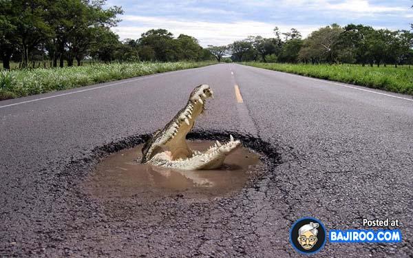 Hati-hati nih kalian yang suka melintas di jalanan berlubang. Karena ditengah jalanan yang berlubang dan ada genangan airnya seekor buaya bisa muncul Pulsker.
