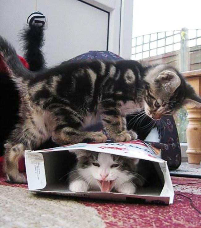 Duh, gara-gara rebutan makanan dua kucing ini sampai nggak akur kayak gini. Nggak kasihan ngeliat temennya tersiksa?.