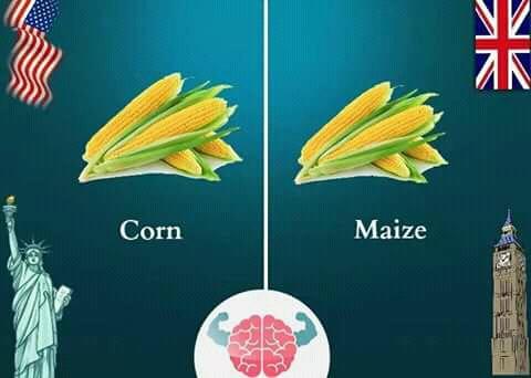 Kadang kita berpikir nih Pulsker, apa sih perbedaannya 'corn' sama 'maize'. Keduanya sama, hanya saja orang Amerika dan Inggris menyebutnya berbeda.