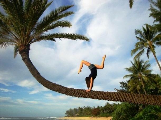 Acroyoga di atas pohon palem? Siapa takut?!