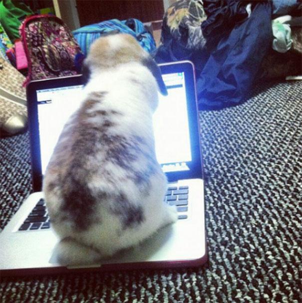 Nggak cuma anjing dan kucing aja, kelinci juga bisa iseng lho!