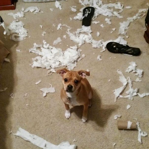 Jangan pernah meninggalkan anjingmu sendirian di rumah tanpa pengawasan kalau nggak mau kaya gini jadiny.