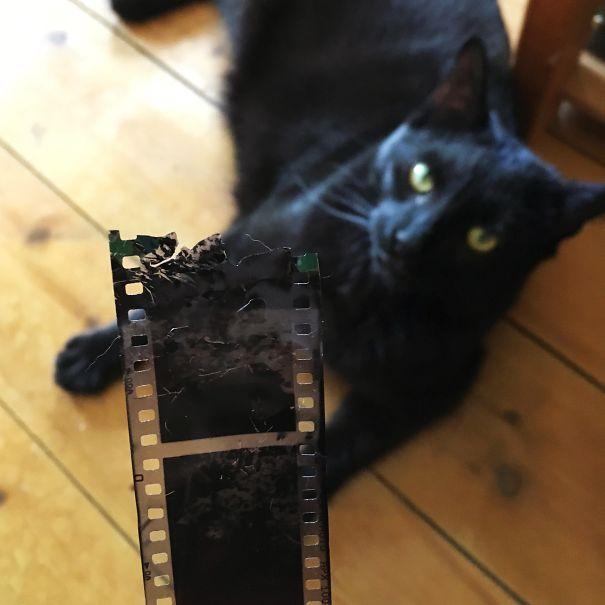 Wah..sepertinya kucing ini merusak memory berharga punya pemiliknya.