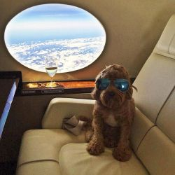 10 Potret Gaya Hidup Anjing yang Bikin Kita Iri..Mewah Banget!