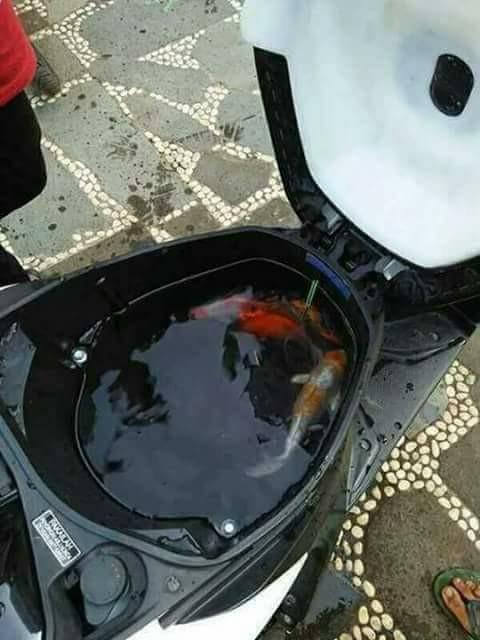 Berhubung ke pasar beli ikan nggak bawa tempat makanya dimasukin ke dalam jok motor.