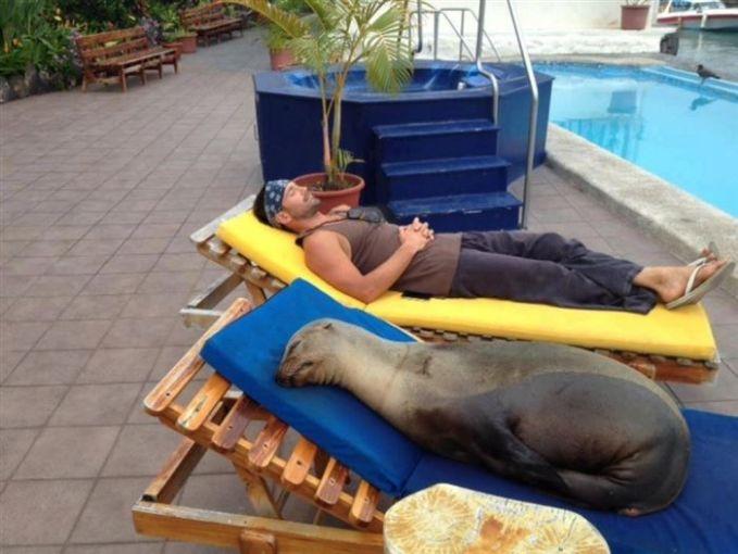 Emang situ aja yang bisa tidur siang, anjing laut juga kelleeess