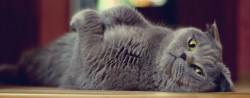 Selain Meong Ini Sebutan Panggilan Kucing Dari Berbagai Negara
